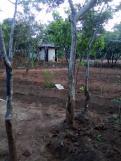 aanplant nieuwe bomen. bewustwording belang van hout en bomen
